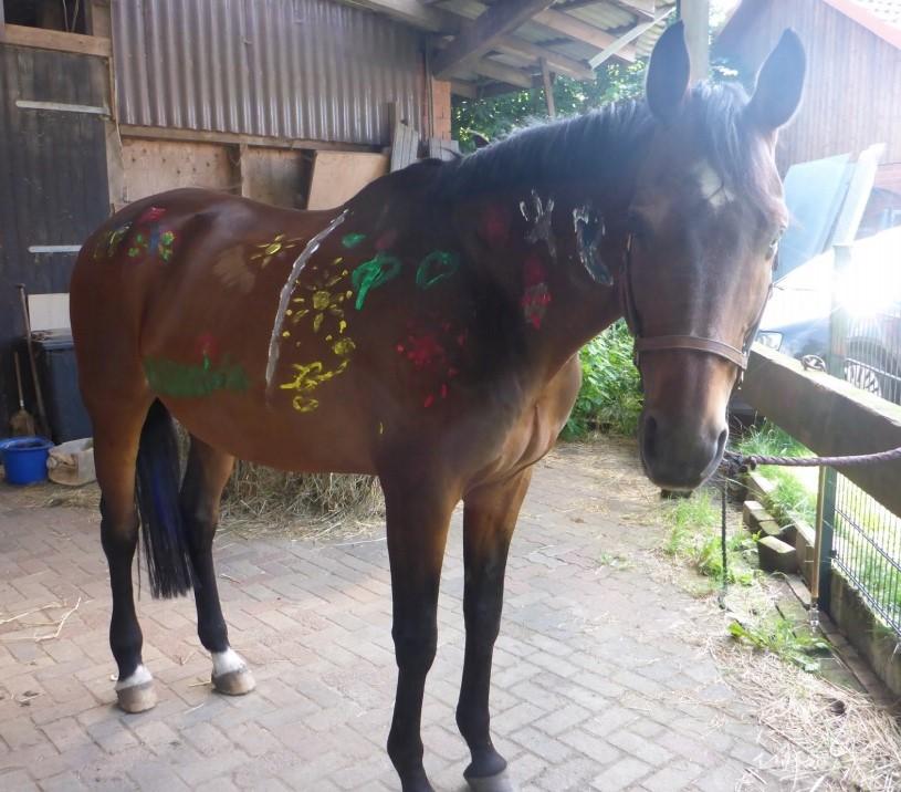 Patenschaftspferd Canto